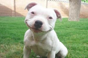 smiling-dog--620x413